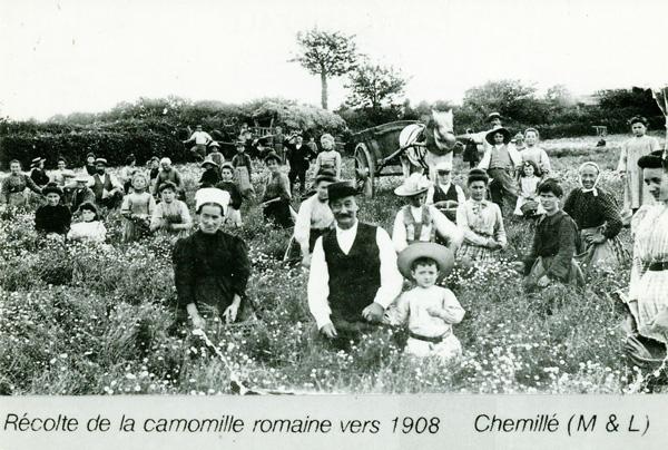 Cailleau Herboristerie - Anjou
